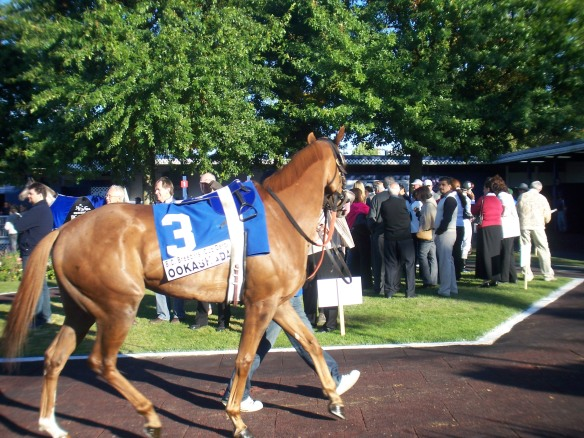 Ookashada at the BC Derby 2007
