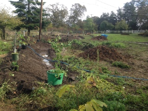 food forest planting